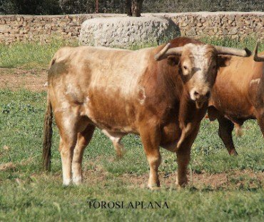 Fiesta de la Asociación Taurina de Linares de Mora – 21 de Julio