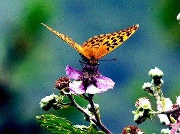 Mariposas e insectos de la Sierra de Gúdar